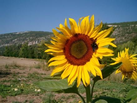 Frankreich - Provence 1.jpg